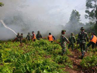 cara mencegah bahaya kebakaran hutan